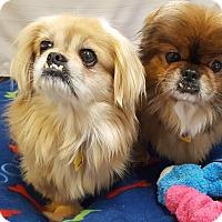 Adopt A Pet :: Alma and Tillie - Fennville, MI