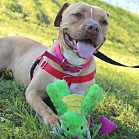 Adopt A Pet :: Tyra - Auburn, CA