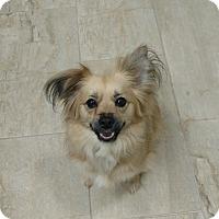 Adopt A Pet :: Mable Jane - Alpharetta, GA