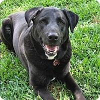 Adopt A Pet :: Charlie - Houston, TX