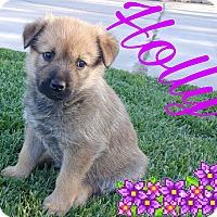 Adopt A Pet :: Holly - Hesperia, CA