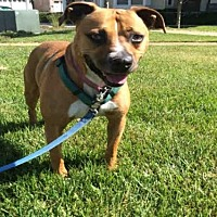 Adopt A Pet :: MINNOW - Alameda, CA