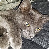 Adopt A Pet :: Granite - Tampa, FL