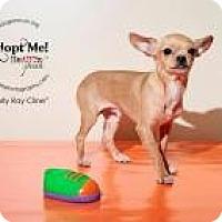 Adopt A Pet :: Curly Ray Cline - Shawnee Mission, KS