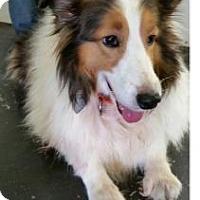 Adopt A Pet :: Pete - COLUMBUS, OH