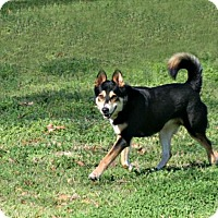 Adopt A Pet :: Hemmi - Lufkin, TX