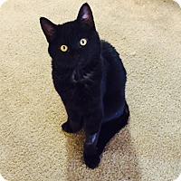 Adopt A Pet :: Thomas - Modesto, CA