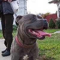 Adopt A Pet :: BROWNIE - Pt. Richmond, CA