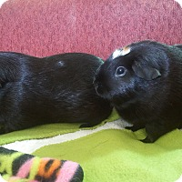 Adopt A Pet :: Phoebe & Cutie Pie - San Antonio, TX