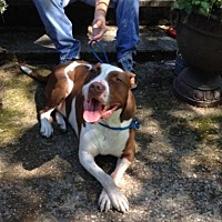 Adopt A Pet :: Carl - Belleville, MI