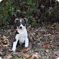 Adopt A Pet :: Rudy - South Dennis, MA