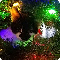 Adopt A Pet :: Rosie& Emmy - Clay, NY