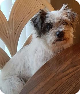 Terrier (Unknown Type, Medium) Mix Dog for adoption in Livonia, Michigan - Daisy Mae-ADOPTED