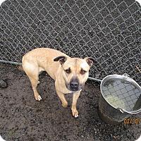 Adopt A Pet :: Omily - Tillamook, OR