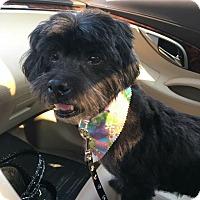 Adopt A Pet :: Willard - Sweet Senior Man! - Quentin, PA