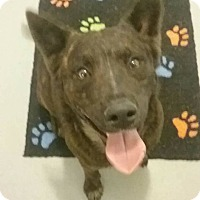 Adopt A Pet :: Ace - Gainesville, FL