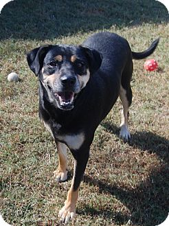 Hound (Unknown Type) Mix Dog for adoption in Manning, South Carolina - Brandy