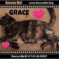 Adopt A Pet :: Grace - Highland, MI
