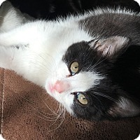 Adopt A Pet :: Sonny - Barrington, NJ