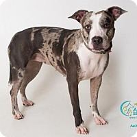 Adopt A Pet :: BUNNY - Camarillo, CA