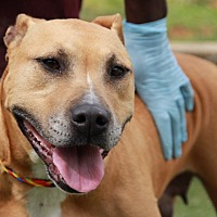 Adopt A Pet :: Dove - Greensboro, NC