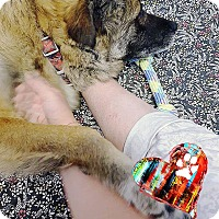 Adopt A Pet :: Hachiko - Ottawa, ON