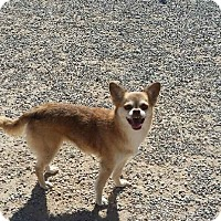 Adopt A Pet :: Lateesha - Las Vegas, NV