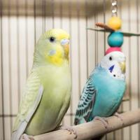 Adopt A Pet :: Rose - Lowell, MA