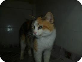 Calico Cat for adoption in Birmingham, Alabama - JellyBean