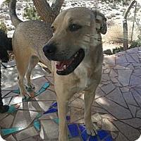 Adopt A Pet :: Bucky - Lucerne Valley, CA