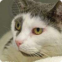 Adopt A Pet :: Abbie - Secaucus, NJ