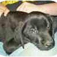 Adopt A Pet :: Buck - Wakefield, RI