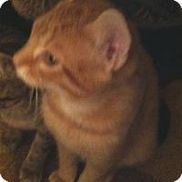 Adopt A Pet :: General Hop - Cocoa, FL