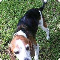 Adopt A Pet :: Gunnar - Jacksonville, FL
