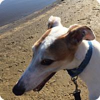 Adopt A Pet :: Ricos Green Go - Gerrardstown, WV