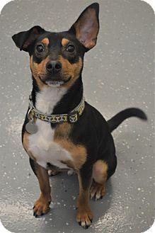 Mixed Breed (Small) Mix Dog for adoption in Kalamazoo, Michigan - Frank