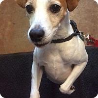 Adopt A Pet :: Peanut - Port Clinton, OH