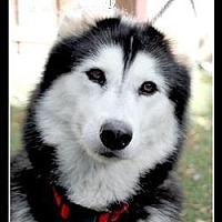 Adopt A Pet :: YoLo - Los Angeles, CA