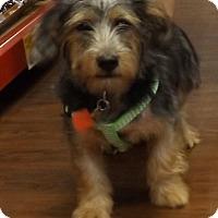 Adopt A Pet :: Sparky - Memphis, TN