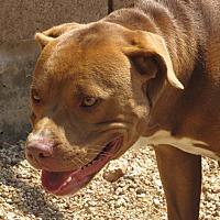 Adopt A Pet :: Creedon - Sierra Vista, AZ