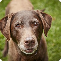 Adopt A Pet :: Coco - Petaluma, CA