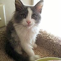 Adopt A Pet :: Kip - Salisbury, NC