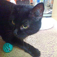 Adopt A Pet :: Lenore - Morganton, NC
