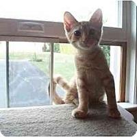 Adopt A Pet :: Lovebug - Jenkintown, PA