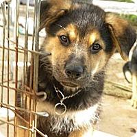 Adopt A Pet :: Bear - Mission Viejo, CA