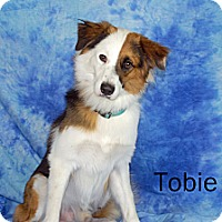 Adopt A Pet :: Tobie - Ft. Myers, FL
