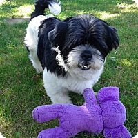 Adopt A Pet :: Brady - Mississauga, ON