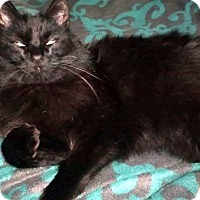 Adopt A Pet :: Izzy - Las Vegas, NV