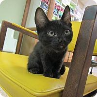 Adopt A Pet :: Kia - Medina, OH