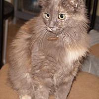 Adopt A Pet :: Glamour - Alhambra, CA